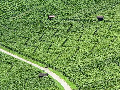 Winemaking Photograph - Zig-zag In Vineyards by Ursula Sander