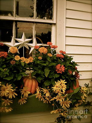 Photograph - Zinnias In The Window Box  by Nancy Patterson