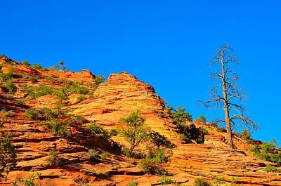 Photograph - Zion Tree by Mark Bowmer