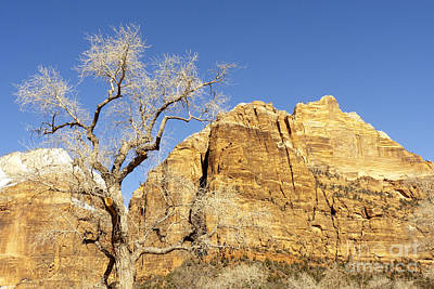 Art Print featuring the photograph Zion Winter Sky by Bob and Nancy Kendrick