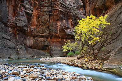 Photograph - Zion's Virgin River In Autumn by Pierre Leclerc Photography