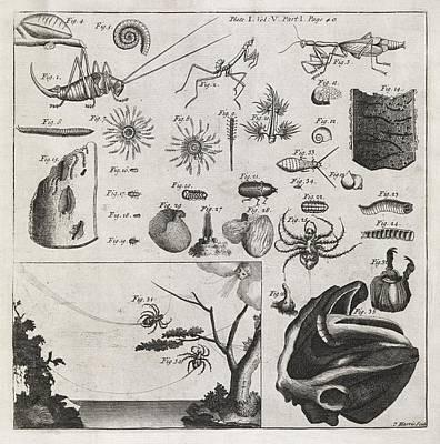 Zoological Illustrations, 18th Century Art Print