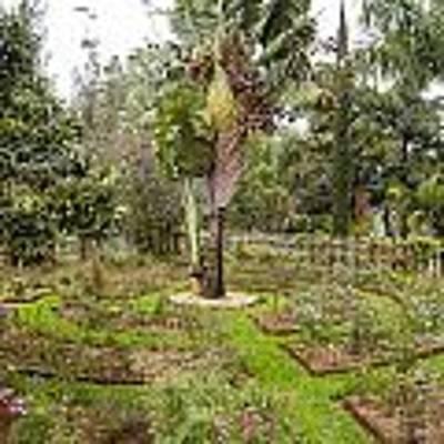 Kigali Genocide Memorial Garden Art Print by Paul Weaver