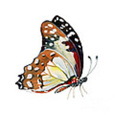102 Perched White Lady Butterfly Original by Amy Kirkpatrick