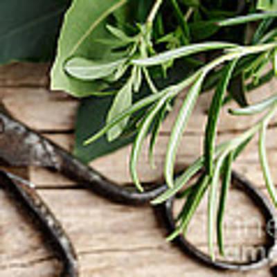 Kitchen Herbs Art Print