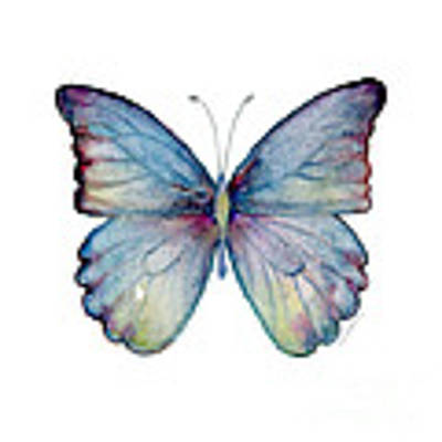 43 Blue Celestina Butterfly Art Print by Amy Kirkpatrick