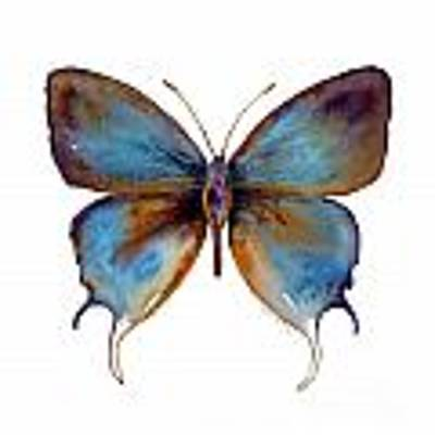 48 Manto Hypoleuca Butterfly Original by Amy Kirkpatrick