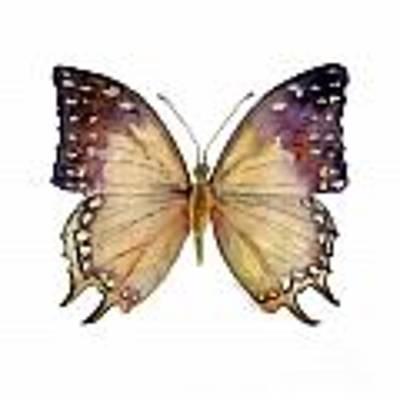 63 Great Nawab Butterfly Art Print