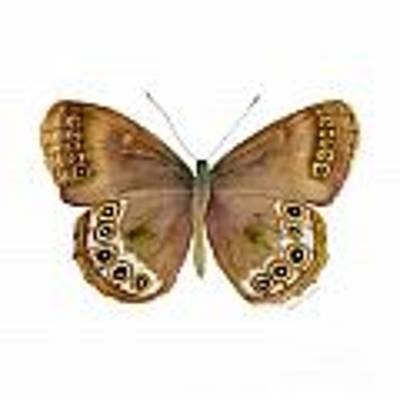 64 Woodland Brown Butterfly Original by Amy Kirkpatrick