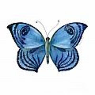 75 Capanea Butterfly Art Print by Amy Kirkpatrick