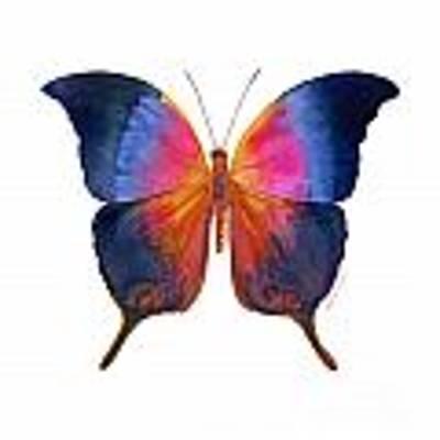 96 Brushfoot Butterfly Original by Amy Kirkpatrick