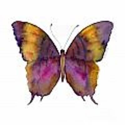 99 Marcella Daggerwing Butterfly Art Print