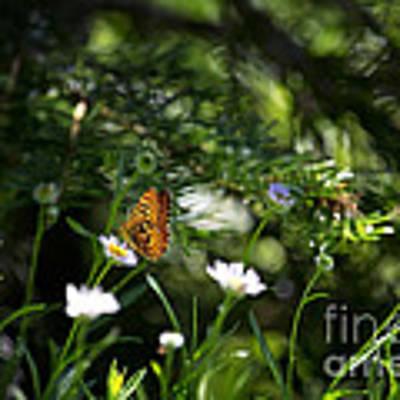 A Butterfly's World Art Print by Belinda Greb