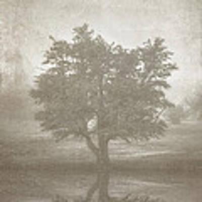 A Tree In The Fog 3 Art Print by Scott Norris