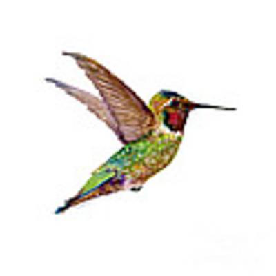 Anna Hummingbird Art Print by Amy Kirkpatrick
