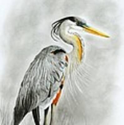 Blue Heron 3 Art Print by Phyllis Howard