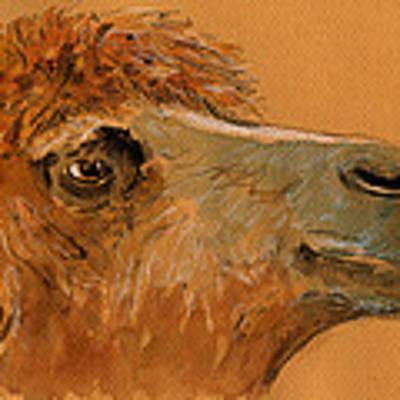 Camel Head Study Art Print