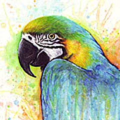 Macaw Watercolor Art Print by Olga Shvartsur