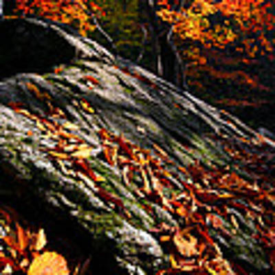 Fall In Gyeryongsan Art Print by Brad Brizek