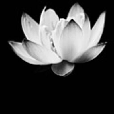 Ghost Lotus Art Print by Priya Ghose