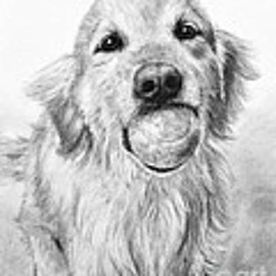 Golden Retriever With Ball Art Print by Kate Sumners