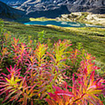 Grizzly Bear Fireweed Art Print by Tim Newton