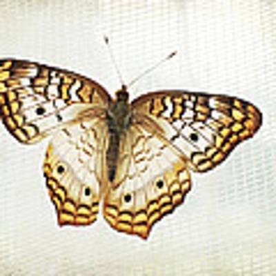 Illuminated Wings Art Print by Lupen  Grainne