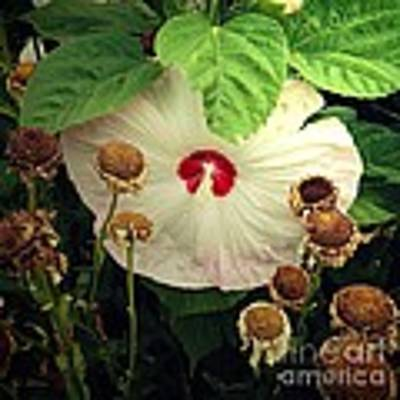 Life And Death In The Garden Art Print by RC DeWinter