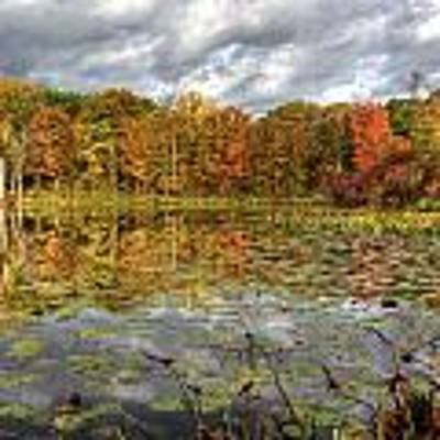 Lily Pads On Foster Pond Art Print by At Lands End Photography