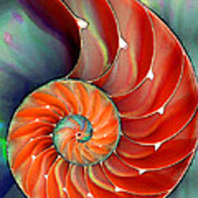 Nautilus Shell - Nature's Perfection Art Print