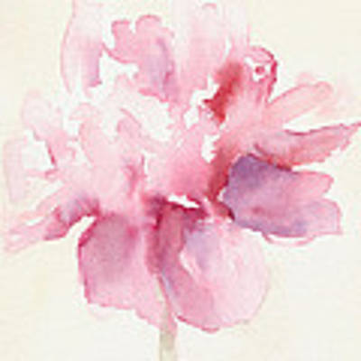 Pink Peony Watercolor Paintings Of Flowers Art Print by Beverly Brown