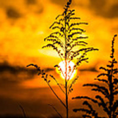 Setting Sun Art Print by Parker Cunningham