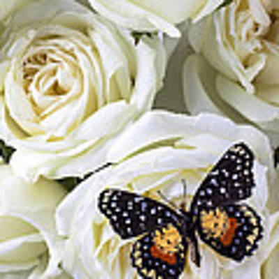 Speckled Butterfly On White Rose Art Print