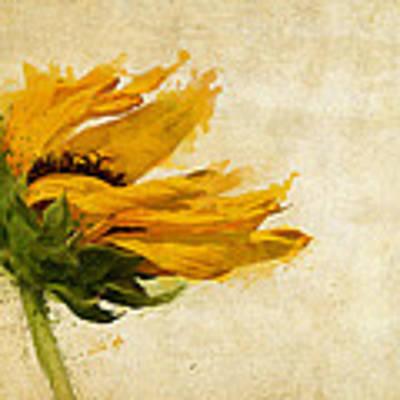 Sunflower Breezes Art Print by Nikki Marie Smith