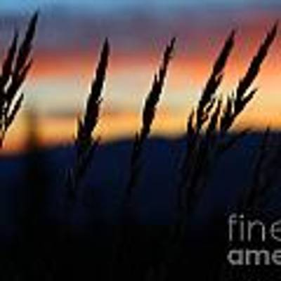Sunrise From Mt. Elbert Art Print by Kate Avery