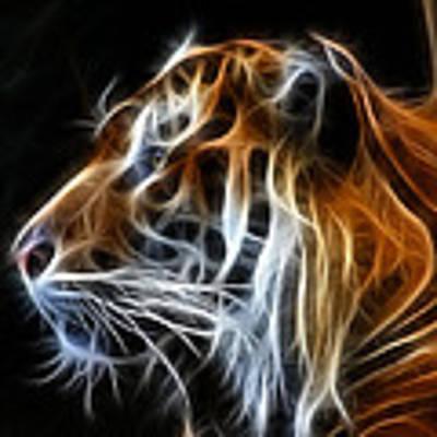 Tiger Fractal Art Print by Shane Bechler