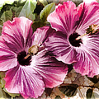 Twin Hibiscus Art Print by Donna Proctor
