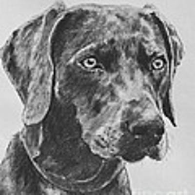 Weimaraner Drawn In Charcoal Art Print by Kate Sumners
