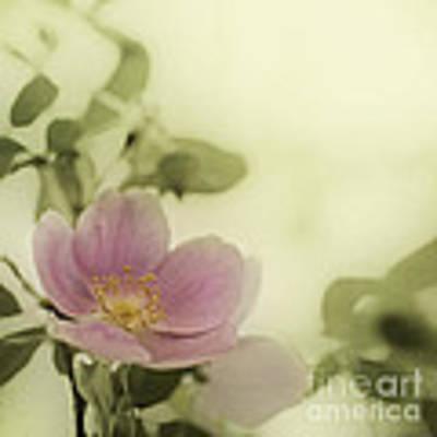 Where The Wild Roses Grow Art Print