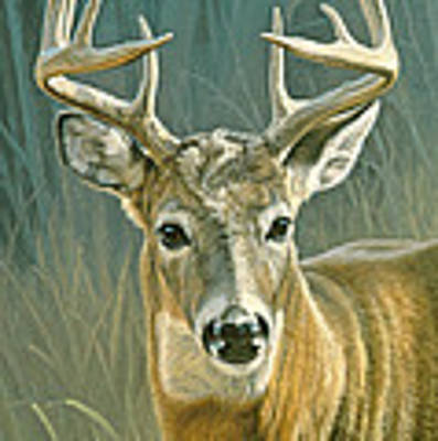 Whitetail Buck Art Print