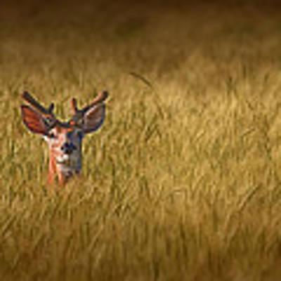 Whitetail Deer In Wheat Field Art Print