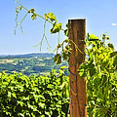 Landscape With Vineyard Art Print
