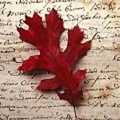 Leaf On Letter Art Print by Garry Gay
