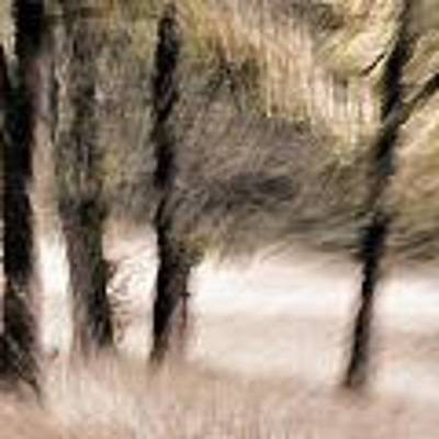 Passing By Trees Art Print