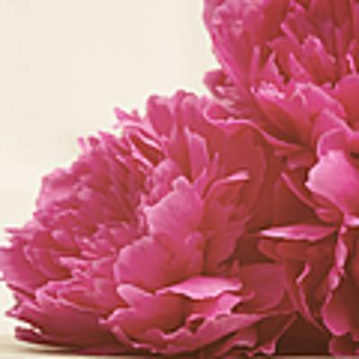 Pretty Pink Peonies Art Print by Kim Fearheiley