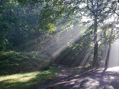Photograph -    Forest Sunrays by Helen Vanterpool