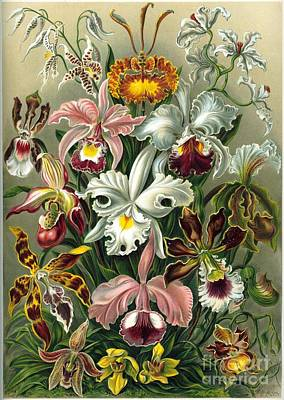 A Lithographic Color Plate From Ernst  Art Print by MotionAge Designs
