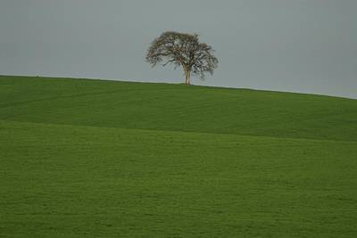 Photograph -  A Lone by Sara Stevenson