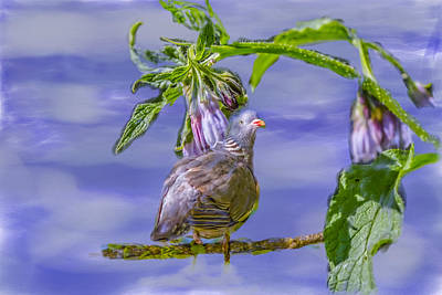 Photograph - Comfrey Dove by Leif Sohlman