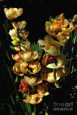 Photograph -  Amazing Taiwan Orchids by Jacqueline M Lewis